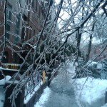Ice Storm in Fort Greene, Brooklyn